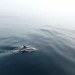 Dolfijnen komen spelen (8)
