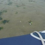 Op avontuur met de bijboot de rivier af met laagwater (6)
