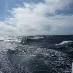 Pittige golven (2)