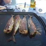 Toch makrelen (3)